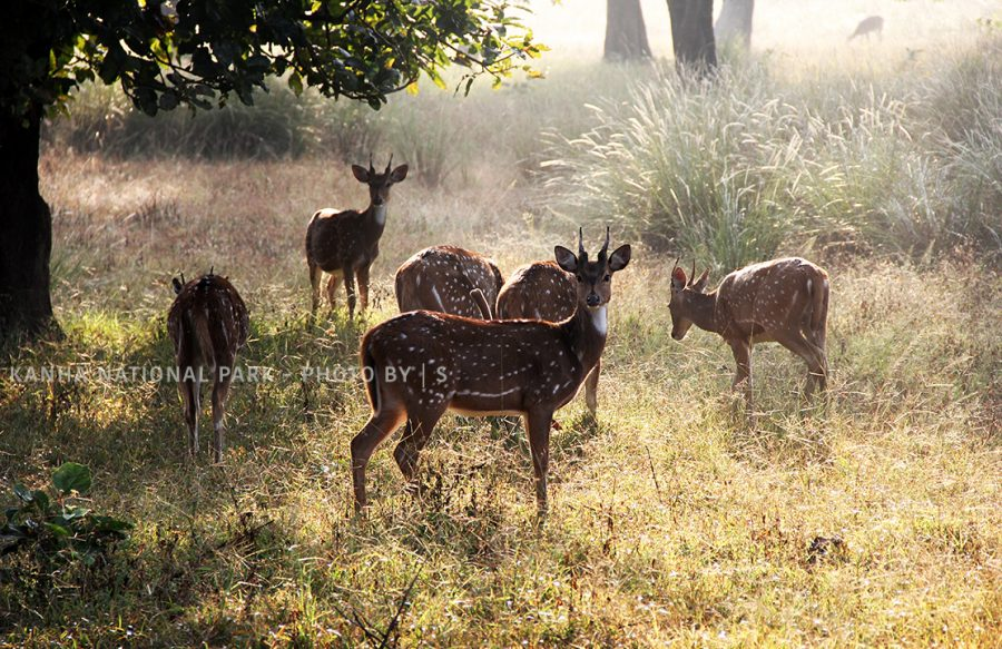 BLOG MORNING DEER