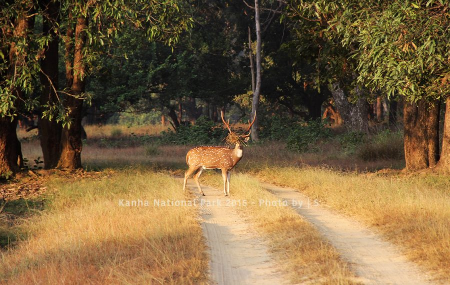 Blog Deer